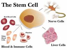 มารู้จักสเต็มเซลล์กันเถ่อะ