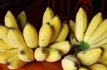 รู้มั้ย? กล้วยจะทำให้ 8 โรคร้ายต่อไปนี้กลายเป็นเรื่องกล้วยๆ ถ้ากินมันเป็นประจำ