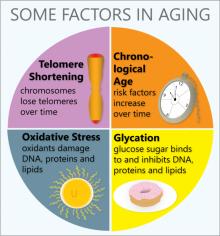 ปัจจัยสำคัญที่ทำให้คนเราแก่เเละเป็นโรค