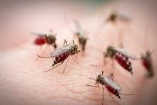 ไข้เลือดออกอันตราย วัคซีนช่วยได้ลดปัญหา